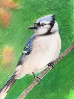 bird2.K.Tollenaere